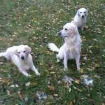 Lena,Lotta und Liese